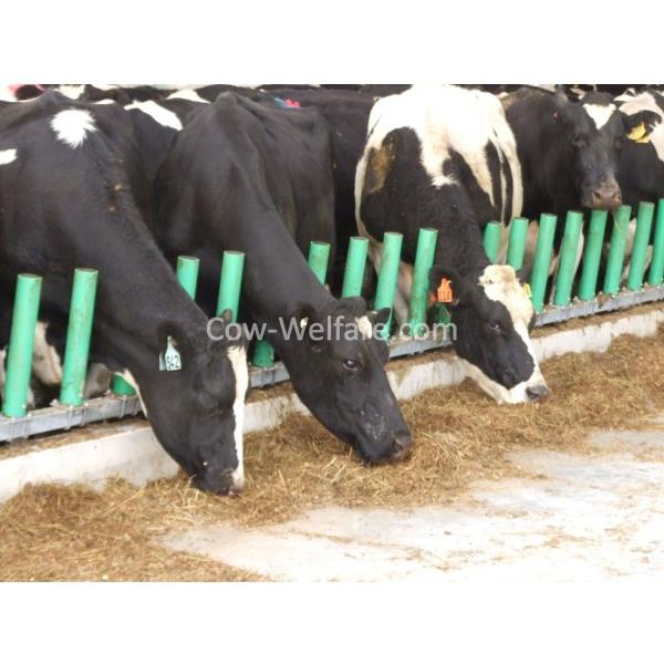 Cow-Welfare Flex Feed